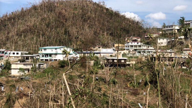 Damaged trees and homes following hurricane