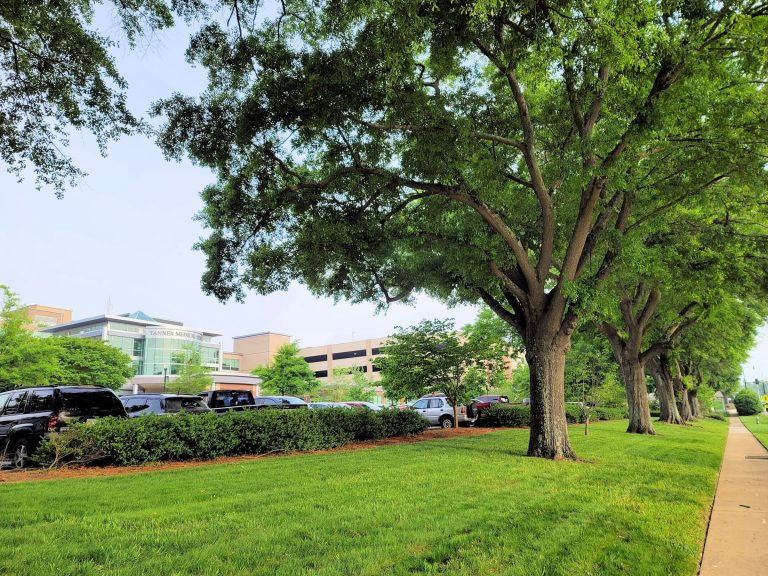 Tanner Medical Center, Tree Campus Healthcare